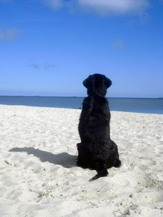 Black Lab On The Beach                                                                                                                                                      More
