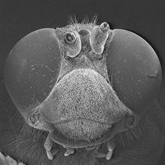 Amazing pics of Yellow Jackets through a microscope