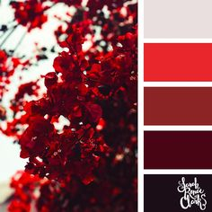 Red color palette | 25 color palettes inspired by the PANTONE color trend predictions for Spring 2018 - Use these color schemes as inspiration for your next colorful project! Check out more color schemes at www.sarahrenaeclark.com #color #colorpalette