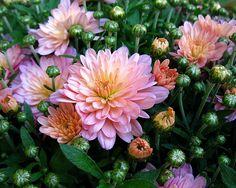 Autumn Flowers by oshita946, via Flickr