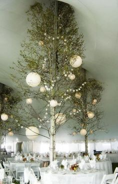 This breathtaking fairy-land tent wedding reception theme was achieved using a florists birch trees  lanterns  Dark Stars genius in assembling  producing a final product (see pictures of the lighting at night).  By Dark Star Lighting, Inc.  (Please note:  Dark Star does not provide the trees for these types of designs.)