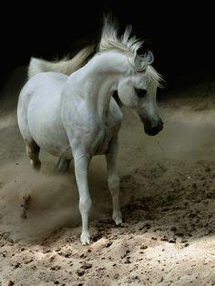 Horse by Wojtek Kwiatkowski (Ronceval)