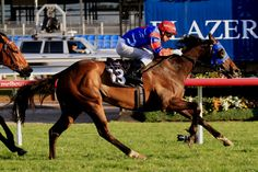 Forever Loved (NZ) 2010 B.m. (High Chaparral (IRE)-Diamond Like (AUS) by Danehill (USA) 1st VRC Rose of Kingston/Jayco S (AUS-G2,1400mT,Flemington) (photo: Racing and Sports)