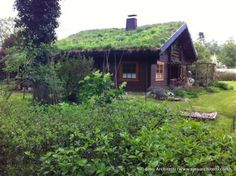 residential green roofs at Wohldorf-Ohlstedt near Hamburg, Germany