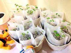 節約におすすめ!簡単スゴイ「手づくり水耕栽培器」で野菜を育てる方法 | nanapi [ナナピ]