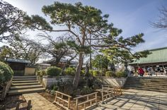Look at Rock border protecting the central pine - gokokuji temple