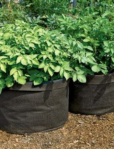 Jumbo Potato Grow Bag | Buy from Gardener's Supply 2 for $20.00