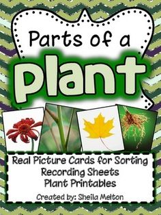 I love using real pictures in science...and so do my students! This Parts of a Plant unit includes 24 real pictures for sorting - 6 examples of plant roots, 6 examples of plant stems, 6 examples plant leaves and 6 examples of plant flowers. The same 24 pictures are included with and without picture labels. After they have sorted the cards, students can complete any of the included recorded sheets. #plants #partsofaplant #science #tpt #education #sheilamelton