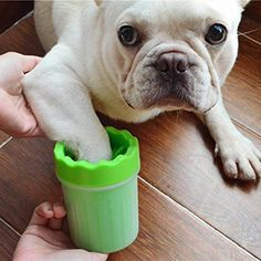 Easy Paws cleaning cup, Frenchie, French Bulldog getting a Pawdicure ; French Bulldog Breed, Bulldog Breeds, Bulldog Puppies, French Bulldogs, Pet Paws, Dog Care Tips, Training Your Dog, Training Tips, Potty Training