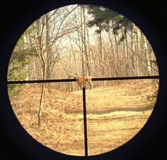 How To Zero A Rifle Scope In Seven Easy Steps : Rifle Scope Center