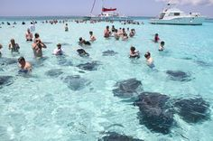 Whenever someone says The Bahamas, people automatically think of Beautiful Atlantis Resort. But, there is far more to see and do! Green Turtle Cay Ardastra Gardens, Zoo and Conservati…