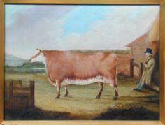 Polled Heifer, c.1820, Unknown Artist