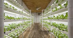 An interesting article about urban container farming.
