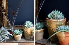 20 Ways to Spruce Up Your Decor With Succulents | Brit + Co