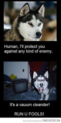 Danger!!! #rescuedog #dog #itsarescuedoglife