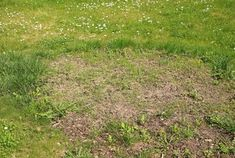 How to plant grass seeds in spring # grass # spring # fashion . How to plant gra Growing Grass From Seed, Best Grass Seed, Planting Grass Seed, Planting Seeds, How To Plant Grass, Home Design, Modern Design, Lawn Care Business, Lawn Care Tips
