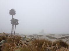 Foggy Coronado