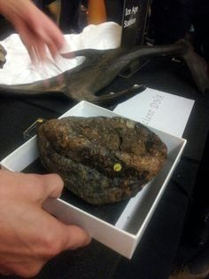 James Doherty on Twitter: 11,000 year old giant sloth turd @NHM_London @NHM_Live #SU14 #yummy