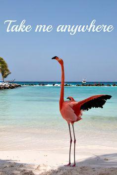 Travel quote with a picture from Aruba (Carribean) / Reise Zitat mit einem Bild von Aruba (Karibik) - finde mehr Fotos in meinem Reiseblog: http://www.travelontoast.de/2016/01/strand-aruba-karibik/