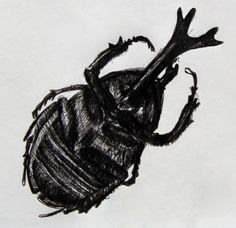 Drawing of a bug that is lying on his back
