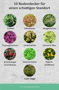 Garden Cottage, Home And Garden, Outside Living, Dream Garden, Permaculture, Garden Paths, Easy Healthy Recipes, Garden Inspiration, Container Gardening