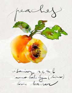 Illustration Food Watercolor art giclée print signed by the artist Food Series Peach : $15.00