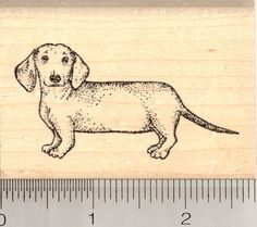 Dachshund Dog Rubber Stamps (RubberHedgehog.Com)