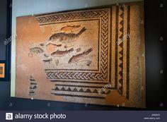 Mosaic of fish, Museum, Alba la Romaine, Rhone-Alpes, France Stock Photo