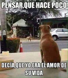 ★★★★★ Memes divertidos para facebook: Decía que yo era el amor de su vida I➨ http://www.diverint.com/memes-divertidos-facebook-decia-amor-vida/ → #fotosdememeschistosos #imágenesdememesderisa #memesdivertidos #memesgraciososespañol