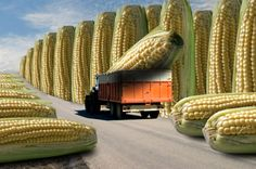 """""""Corn refiners' opposition to petition based on outdated data, misreading of FDA rule,"""" on @FoodIDTheft http://foodidentitytheft.com/corn-refiners-opposition-to-petition-based-on-outdated-data-misreading-of-fda-rule/"""