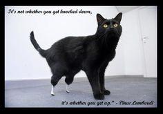 #cat #quote