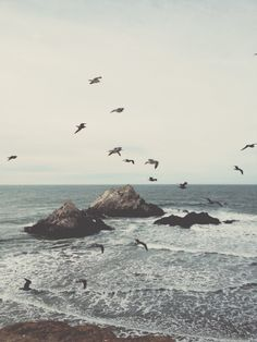 birds | ocean