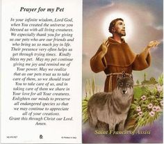 Prayers to St Francis of Assisi to help pets Francis Of Assisi Prayer, Saint Francis Prayer, St Francis, Pet 1, Cat Dog, Yorkshire Terrier, Dog Love, Puppy Love, Patron Saint Of Animals