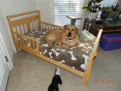 toddler bed into dog bed Diy Dog Blankets, Dog Bedroom, Designer Dog Beds, Diy Dog Bed, Dog Rooms, Dog Signs, Diy Stuffed Animals, Dog Behavior, How To Make Bed