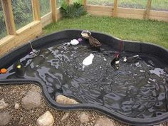 I want a duck pond! Comments show people are cleaning them out daily or every other day. A guy in Maui said have 2 ponds, they'll poop in one and swim in the other. He had a whole system of ponds, one even for a tiny water plant that filtered the water which was recirculated to the other ponds. Cool!