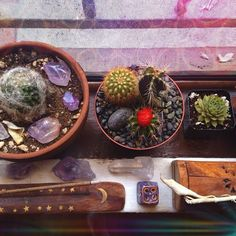Plants. Crystals.  Quartz.  Incense.  Meditation.  Peace.