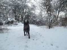 Ilverich im Schnee - Meerbusch im Winter - Spazieren gehen bei Eis mit Hund