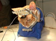 Stop animal testing! Please sign and share this petition! Stop this unnecessary cruelty!