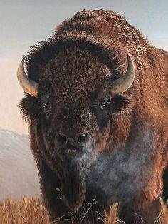 I absolutely adore buffalo...