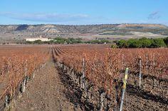 Vineyards at LeDomaine, Valladolid, Spain