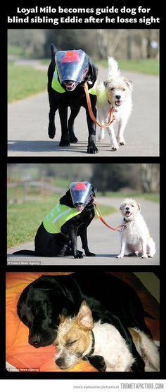 Aw, thats so sad that he lost sight, but its sweet that he has his own little seeing eye dog