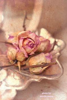 ❥ dried roses