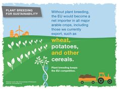 Without plant breeding, the EU would become a net importer in all major arable crops, including those we currently export.