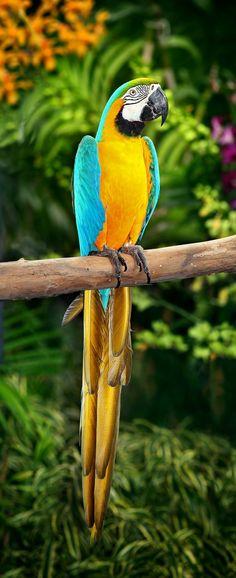 Bunter Ara Papagei - wunderschönes Foto