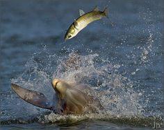 st augustine florida fishing....playing