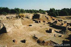 Harappa public well
