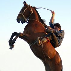 Photographing Horses - Digital Photo Secrets