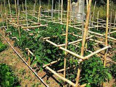 Νέος Αγρότης: Ντομάτα σπορά φύτεμα καλλιέργεια Fruit Garden, Vegetable Garden, Vine Trellis, Vines, Home And Garden, Outdoor Structures, Wood, Gardening, Grape Vine Trellis
