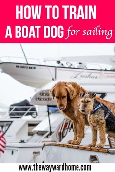 Kayak Tips And Tricks Want to go sailing with your dog? Here are some tips and tricks from people who live on sailboats and cruise full time with their dogs. Boating Tips, Kayaking Tips, Sailboat Living, Living On A Boat, Dogs On Boats, Sailing Trips, Boat Projects, Boat Stuff, Used Boats