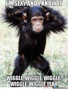 funny animals, cutest babi, sexi, animal funnies, monkeys